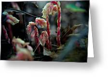 Indian Pipe 5 Greeting Card