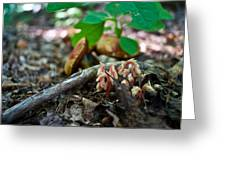 Indian Pipe 6 Greeting Card