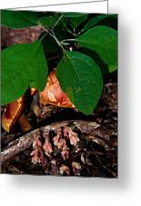 Indian Pipe 7 Greeting Card