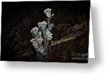 Indian Pipe Greeting Card
