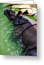 Indian Rhinoceros Greeting Card