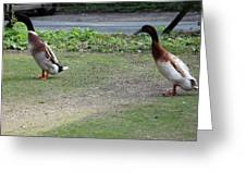 Indian Runner Ducks Greeting Card