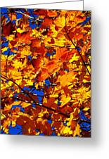 Indian Summer ... Greeting Card
