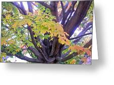 Indian Tree Greeting Card
