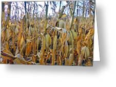 Indiana Corn 1 Greeting Card