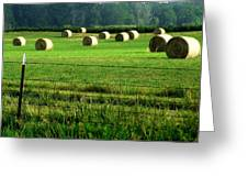 Indiana Hay Greeting Card