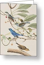 Indigo Bird Greeting Card