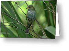 Indigo Bunting - Felts Nature Preserve - Ellenton Florida Greeting Card