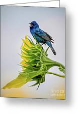 Indigo Bunting Sunflower Greeting Card
