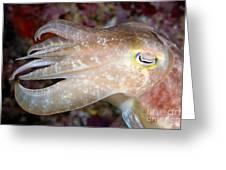 Indonesia, Cuttlefish Greeting Card