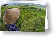 Indonesian Rice Farmer Greeting Card