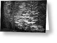 Infared Photograph Greeting Card
