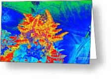 Infared Greeting Card