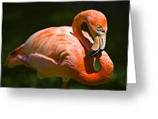 Infinity Pink Flamingo Greeting Card