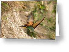 Inflight Feeding Bee Eater Greeting Card