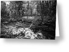 Infra Creek  Greeting Card