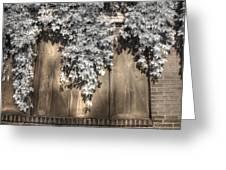 Infrared Botanical Sepia  Greeting Card