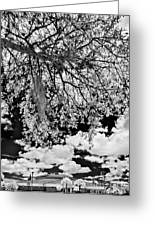 Infrared Indian River State College Hendry Campus #8 Greeting Card