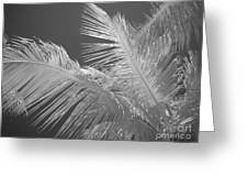 Infrared Palm Trees Greeting Card