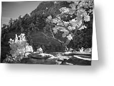 Infrared Photo Of A Twisted Pine Tree Greeting Card