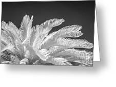 Infrared Sago Palm Greeting Card