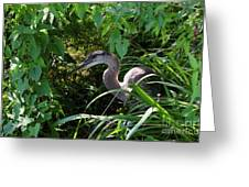 Injure Blue Heron Greeting Card