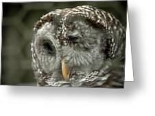 Injured Owl Greeting Card