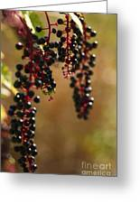 Inkberry Greeting Card