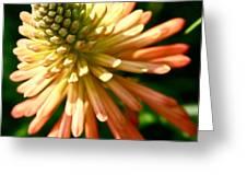 Inn Bloom Greeting Card