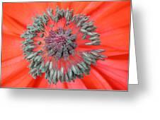 Inner Poppy Greeting Card