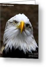 Inquisitive Eagle Greeting Card
