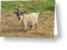 Inquisitive Goat Greeting Card