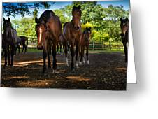 Inquisitive Horses Greeting Card
