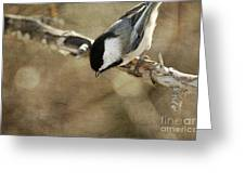 Inquisitive Greeting Card by Reflective Moment Photography And Digital Art Images