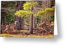 Inquisitive Whitetail Deer Greeting Card