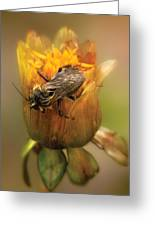 Insect - Bee - Dare To Bee Different Greeting Card
