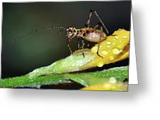 Insect And Morning Dew Greeting Card