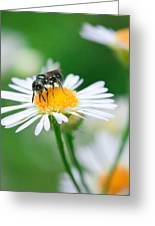 Insect Buffet Greeting Card