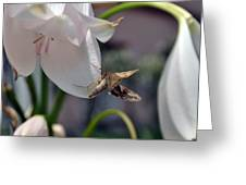 Insect In Flower Greeting Card