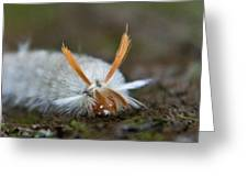 Insect Larvae With Hairdo Greeting Card