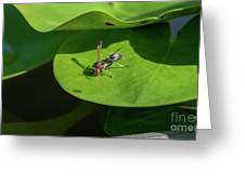 Insect On Lotus Leaf Greeting Card
