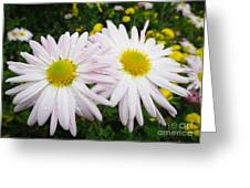 Inseparables Daisies Greeting Card