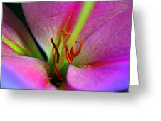 Inside A Lily Greeting Card