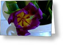 Inside A Purple Tulip Greeting Card