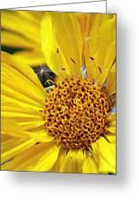 Inside Sunflower Greeting Card
