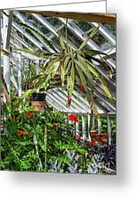 Inside The Greenhouse Greeting Card
