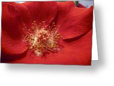Inside The Rose Greeting Card