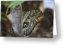 Instant Butterfly Greeting Card