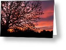 Intense Sunset Tree Silhouette Greeting Card