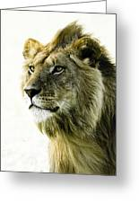 Intensity Greeting Card by Michele Burgess